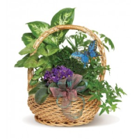 MIXED PLANTER WITH VIOLET IN BASKET