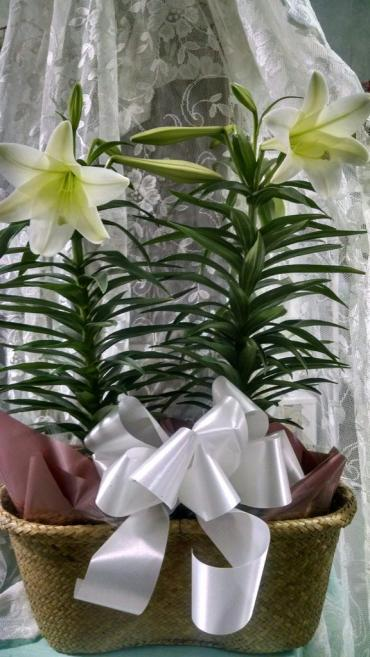 Easter Lily deluxe